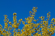 Blue Photos - Blue - Yellow by Gert Lavsen