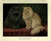 Pussy Framed Prints - Blue and Cream Persians Framed Print by W Luker