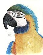 Bird Pastels Posters - Blue and Gold Macaw Poster by Heather Gessell