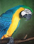 Pam Kaur - Blue and Gold Macaw