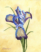 Birthday Present Paintings - Blue and Purple Iris by Sara Davenport