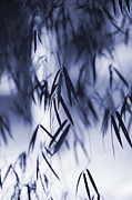 Zen Garden Prints - Blue Bamboo Print by Tim Gainey