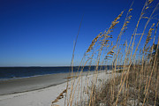 Pawleys Island Prints - Blue Beach Print by Barbara Marie Kraus