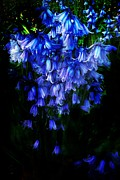 Scott Allison - Blue Bells