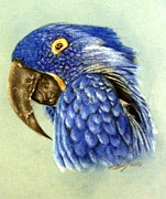 Tropical Art Pastels Prints - Blue bird Print by Michael Alvarez