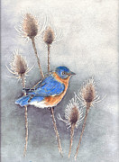 Blue Thistles Prints - Blue Bird Print by Nan Wright