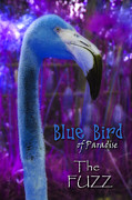 Blues Digital Art Originals - Blue Bird of Paradise - The Fuzz by Barbara MacPhail