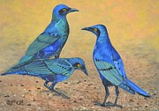 Starlings Paintings - Blue Birds of Happiness by Caroline Street
