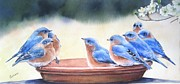 Birdbath Prints - Blue Board Meeting Print by Patricia Pushaw
