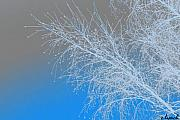Blue Branches Print by Carol Lynch