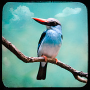 Exotic Bird Prints - Blue Breasted Kingfisher Print by Gary Heller