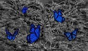 Blue Butterflies 2 Print by Barbara St Jean