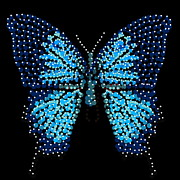 Blue Butterfly Black Background Print by R  Allen Swezey