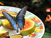 Melinda Saminski - Blue Butterfly on Fruit...