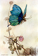 Supernatural Digital Art - Blue Butterfly by Warwick Goble