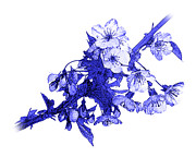 Blue And White Porcelain Prints - Blue Cherry Print by Jane McIlroy
