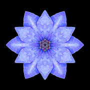 Blue Clematis Flower Mandala Print by David J Bookbinder