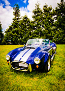 Classic Cobra Prints - Blue Cobra Print by Phil