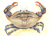 Crab Framed Prints - Blue Crab Framed Print by Amanda Makepeace