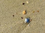 Blue Crab Print by Leana De Villiers