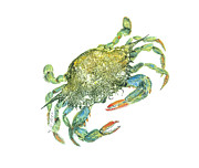 Under The Ocean Mixed Media Prints - Blue Crab Print by Nancy Gorr