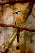 Textured Bird Mixed Media Posters - Blue Crowned Motmot Poster by Peggy Collins