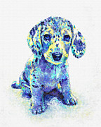 Dachshund Digital Art Framed Prints - Blue Dapple Dachshund Puppy Framed Print by Jane Schnetlage