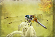 Blue Dasher Print by Pamela Gail Torres