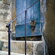 Wooden Building Prints - Blue Door with Pet Outlook Print by Heiko Koehrer-Wagner