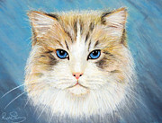 Ruth Jamieson - Blue Eyed Cat