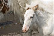 Liz  Alderdice - Blue Eyed Foal