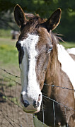 Susan Leggett Metal Prints - Blue Eyed Horse Metal Print by Susan Leggett