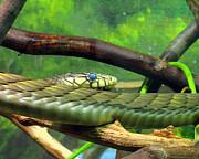 Blue Eyed Snake Print by Patricia Januszkiewicz