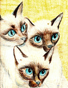 Photographs Pastels - Blue Eyes by Joy Reese