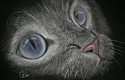 Cat Pastels - Blue Eyes by Stephanie L Carr