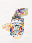 Watercolor On Paper Framed Prints - Blue Fish   Framed Print by Pat Saunders-White