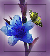 Mikki Cucuzzo Framed Prints - Blue Flower and Butterfly Framed Print by Mikki Cucuzzo