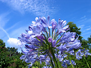 Art Photography - Blue Flower