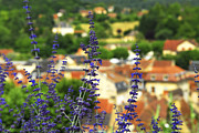 Shingles Framed Prints - Blue flowers and rooftops in Sarlat Framed Print by Elena Elisseeva