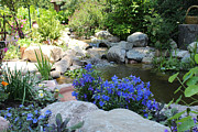 Blue Flowers And Stream Print by Corey Ford