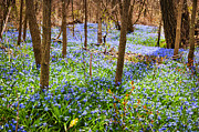 Forest Floor Art - Blue flowers in spring forest by Elena Elisseeva