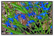 Kimberleigh Ladd - Blue Flowers
