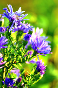 Bokhe Photos - Blue flowers. by Tommy Hammarsten