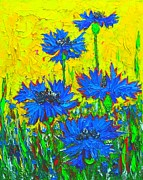 Blue Flowers - Wild Cornflowers In Sunlight  Print by Ana Maria Edulescu