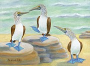 Boobies Paintings - Blue-Footed Boobies by Jeanne Kay Juhos