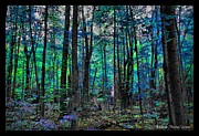 Michaela Preston Metal Prints - Blue Forrest Metal Print by Michaela Preston