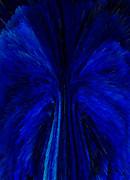 Blue Fuzz Print by Patricia Kay