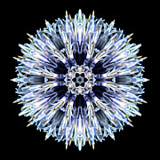 Blue Globe Thistle Flower Mandala Print by David J Bookbinder