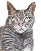 British Shorthair Art - Blue Grey Cat with Piercing Green Eyes by Kate Sumners