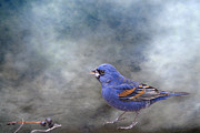 Family Member Prints - Blue Grosbeak with Berries Print by Bonnie Barry
